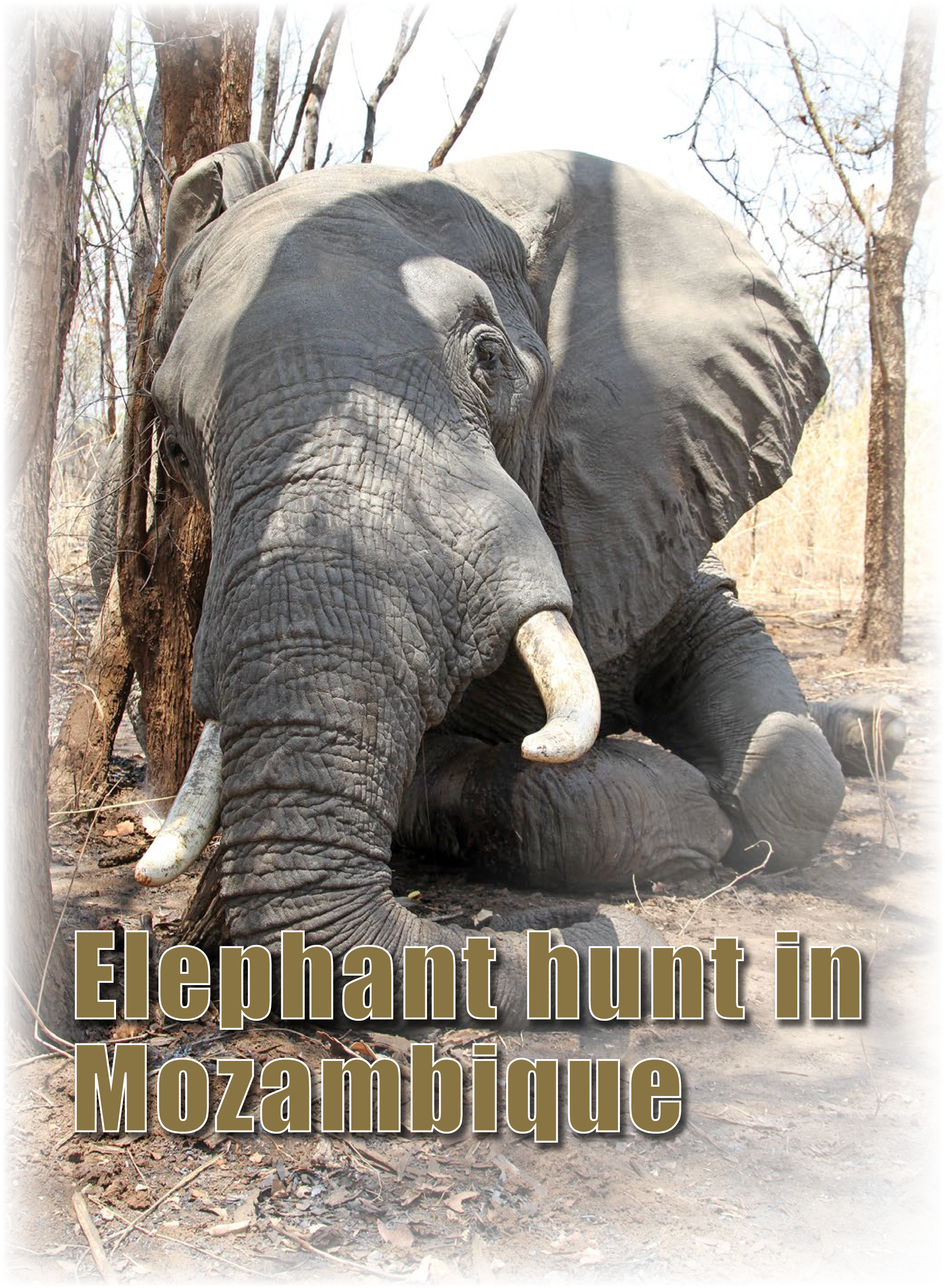 Elephant Hunt In Mozambique Game Hunt Daily